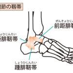 右足関節の外側の靱帯です。